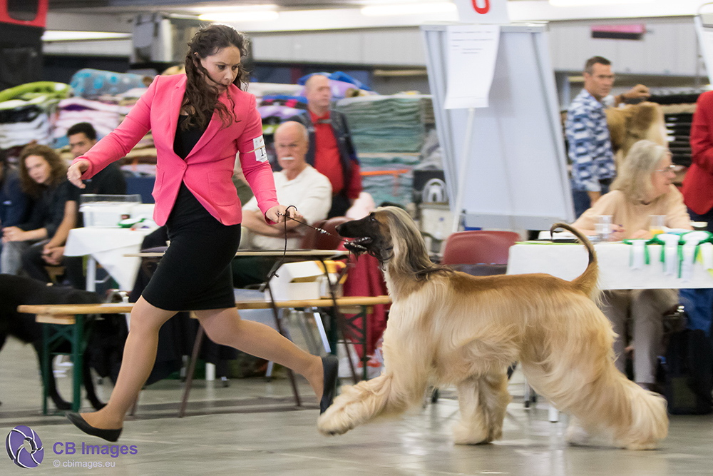 Dogshow 2016 in Rotterdam Ahoy